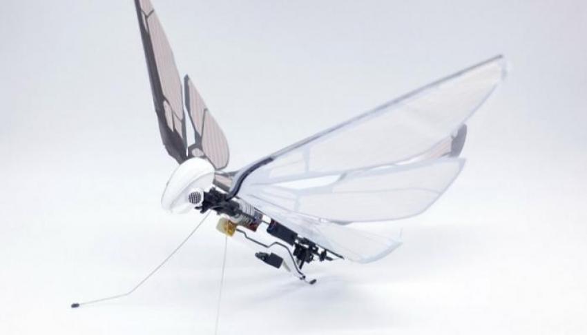 امريكا تبتكر طائرة بحجم النحلة تستطيع القيام بمناورات جوية