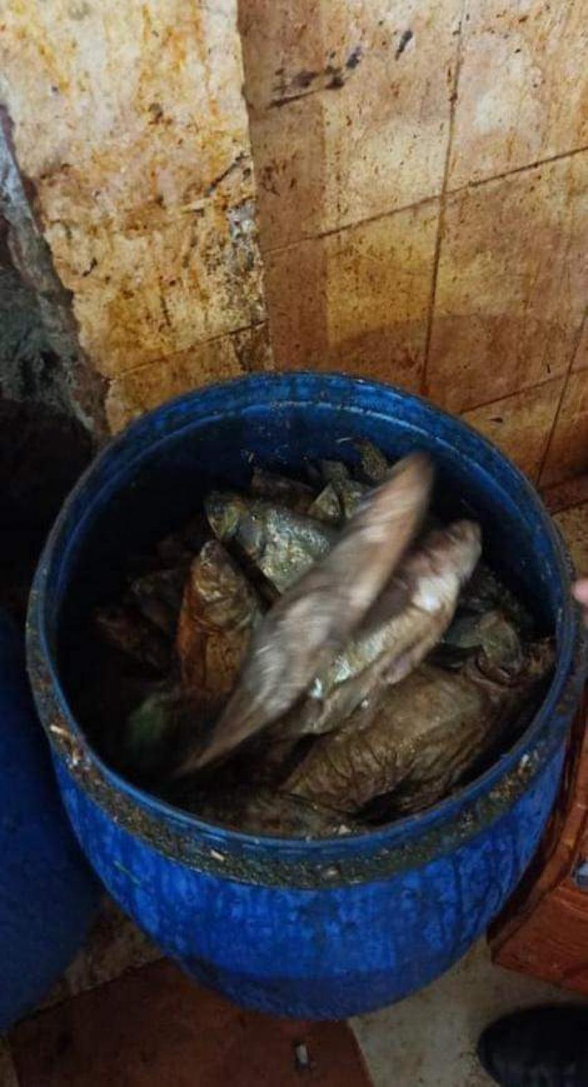 الصحة: ضبط وإعدام 6 أطنان أغذية متنوعة وأسماك مملحة ومدخنة