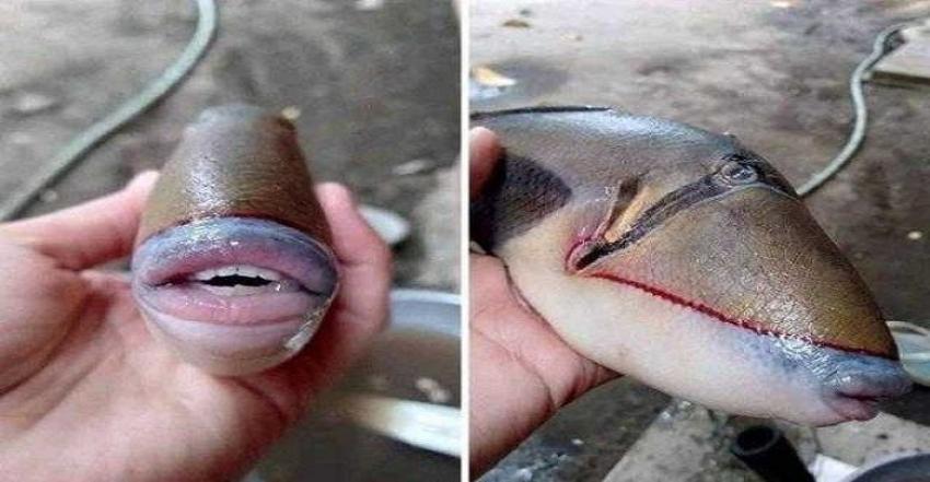 صياد يعثر على سمكة تشبه الإنسان