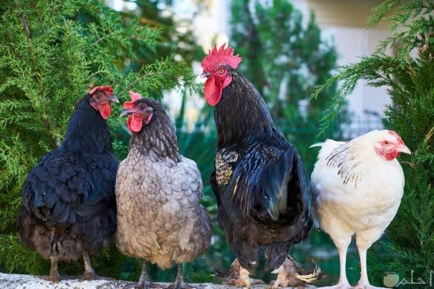 روسيا تعلن عن تسجيل أول حالة لإصابة البشر بإنفلونزا الطيور H5N8